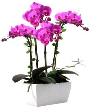 Seramik vazo içerisinde 4 dallı mor orkide  Yozgat çiçek satışı
