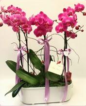 Beyaz seramik içerisinde 4 dallı orkide  Yozgat ucuz çiçek gönder