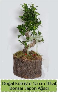 Doğal kütükte İthal bonsai japon ağacı  Yozgat çiçek gönderme