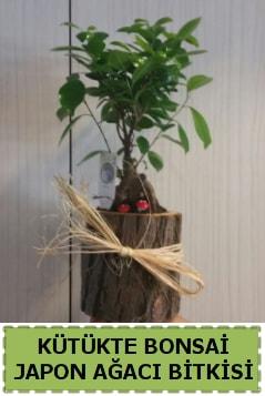 Kütük içerisinde doğal bonsai ağacı  Yozgat çiçekçi telefonları