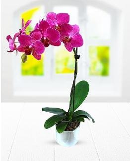Tek dallı mor orkide  Yozgat çiçek satışı