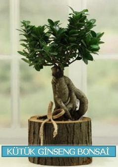 Kütük ağaç içerisinde ginseng bonsai  Yozgat çiçek gönderme sitemiz güvenlidir
