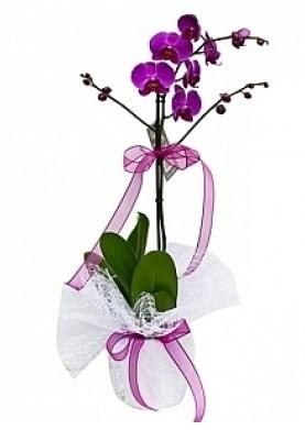 Tekli Mor Orkide  Yozgat çiçek yolla