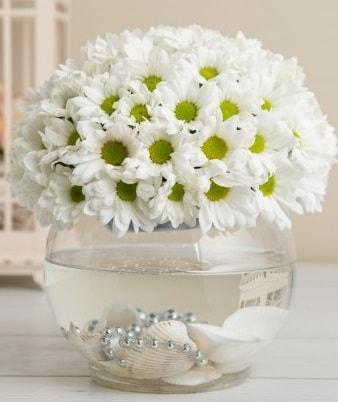 Fanusta beyaz Papatya  Yozgat çiçek satışı