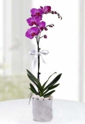 Tek dallı saksıda mor orkide çiçeği  Yozgat çiçekçiler