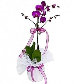 Tek dallı saksıda ithal mor orkide çiçeği  Yozgat çiçekçiler