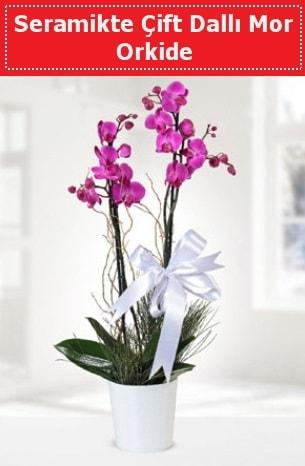 Seramikte Çift Dallı Mor Orkide  Yozgat anneler günü çiçek yolla